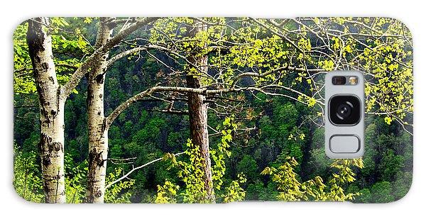 Wellsboro Galaxy Case - Backlit Trees Along The Canyon by Carolyn Derstine