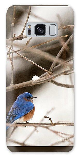 Backyard Bluebird Galaxy Case
