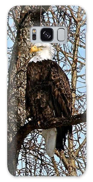 Aroostook County Galaxy Case - Bald Eagle Img_3842 by Charles Cormier