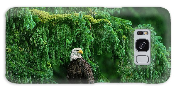 Bald Eagle In Temperate Rainforest Alaska Endangered Species Galaxy Case
