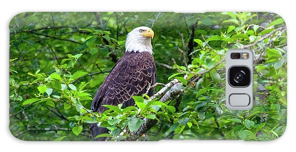 Bald Eagle In Tree Galaxy Case
