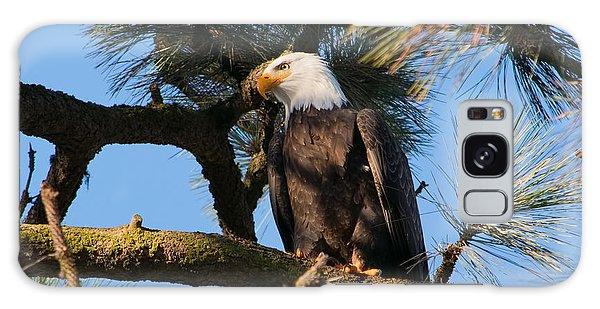 Bald Eagle Perch Galaxy Case