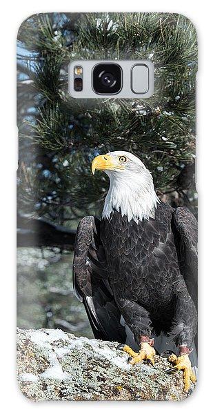 Bald Eagle Ready For Flight Galaxy Case