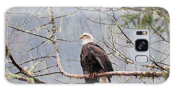 Bald Eagle Resting Galaxy Case