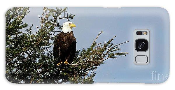 Bald Eagle - Taking A Break Galaxy Case
