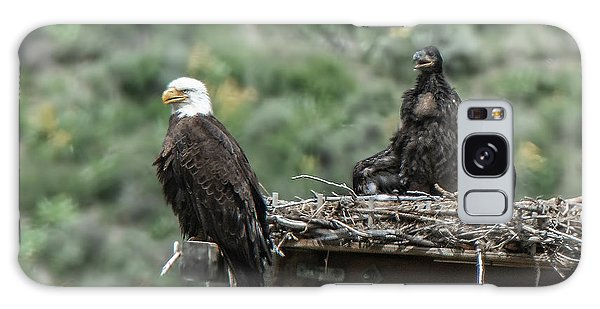 Bald Eaglet Cooling Off On A Hot Spring Day Galaxy Case
