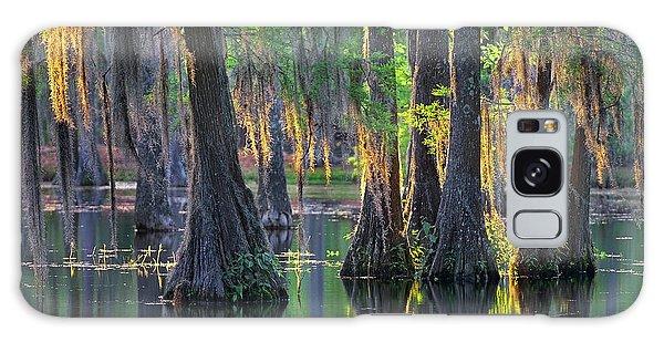 Baldcypress Trees, Louisiana Galaxy Case