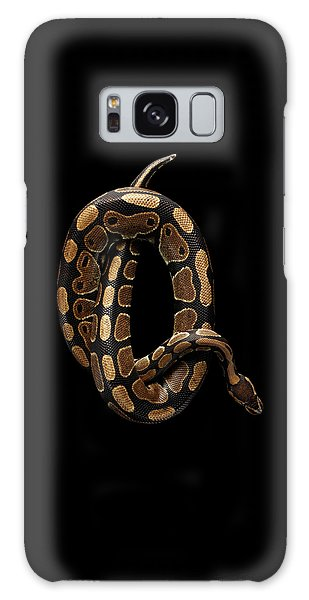 Ball Or Royal Python Snake On Isolated Black Background Galaxy Case by Sergey Taran