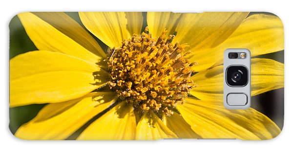 Balsamroot 2 Galaxy Case