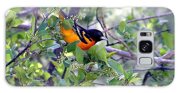 Baltimore Northern Oriole Galaxy Case