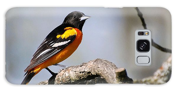 Baltimore Oriole Galaxy Case by Christina Rollo