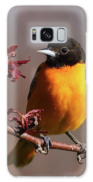 Baltimore Oriole II Galaxy Case