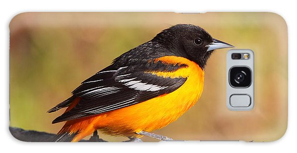 Baltimore Oriole IIi Galaxy Case