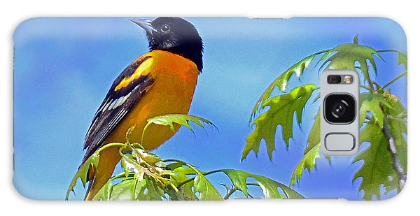 Baltimore Oriole In An Oak Tree Galaxy Case