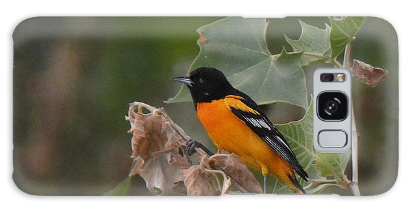 Baltimore Oriole In Sycamore Tree Galaxy Case by Alan Lenk