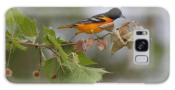 Baltimore Oriole Out On A Limb Galaxy Case