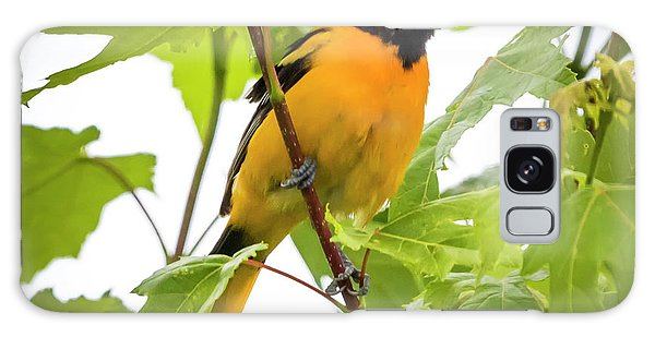 Galaxy Case featuring the photograph Baltimore Oriole With Raspberry  by Ricky L Jones