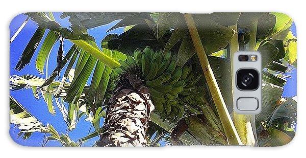 #banana #maui #hawaii #ono #fresh Galaxy Case