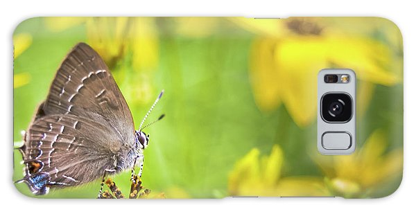 Banded Hairstreak On Coreopsis Galaxy Case