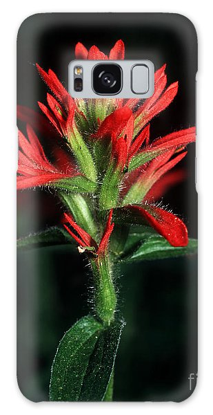 Banff - Indian Paintbrush 4 Galaxy Case