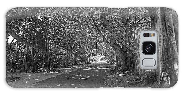 Banyan Street 2 Galaxy Case by HH Photography of Florida