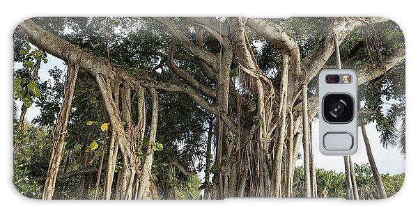 Banyan Tree At Bonnet House Galaxy Case