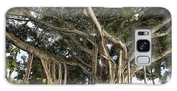 Galaxy Case featuring the photograph Banyan Tree At Bonnet House by Belinda Greb