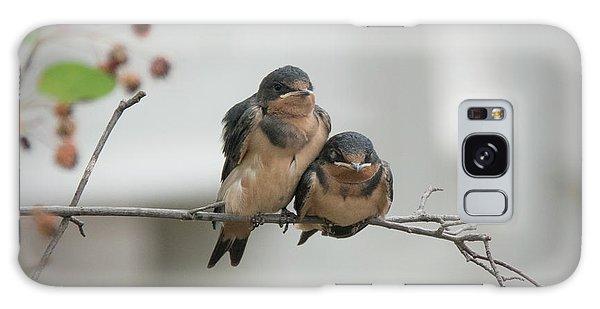 Barn Swallow Fledglings Galaxy Case