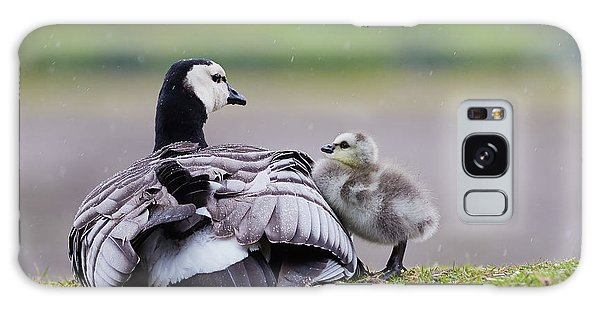 Barnacle Goose With Chick In The Rain Galaxy Case