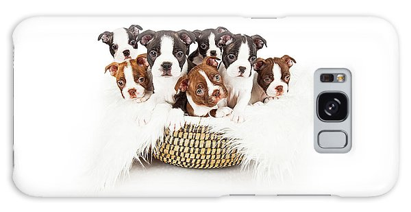 Basket Of Boston Terrier Puppies Galaxy Case