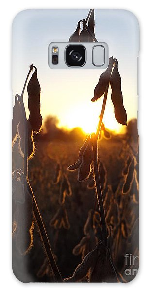 Beans At Sunset Galaxy Case