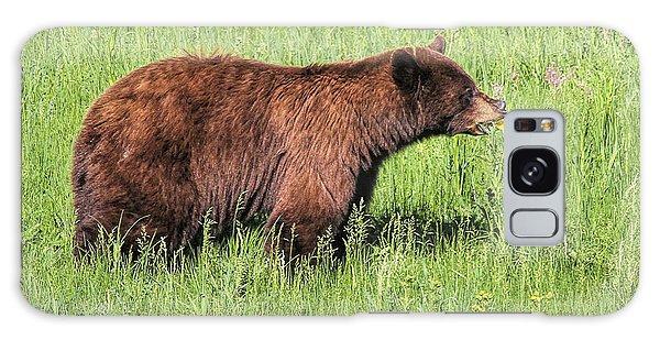 Bear Eating Daisies Galaxy Case