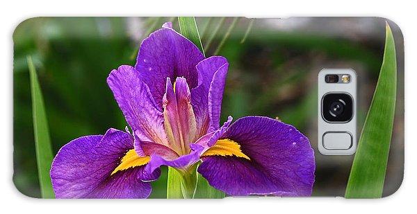 Bearded Iris Galaxy Case by Ronald Olivier
