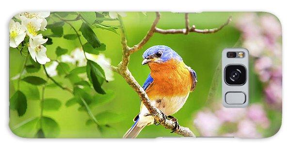 Eastern Bluebird Galaxy Case - Beautiful Bluebird by Christina Rollo