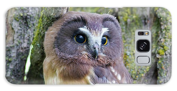 Beautiful Eyes Of A Saw-whet Owl Chick Galaxy Case