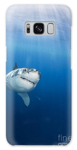 Sharks Galaxy Case - Beautiful Great White by Dave Fleetham - Printscapes