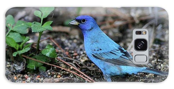 Beautiful Indigo Bunting Galaxy Case