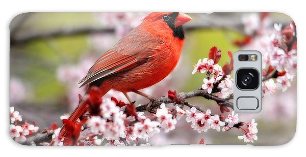 Beautiful Northern Cardinal Galaxy Case