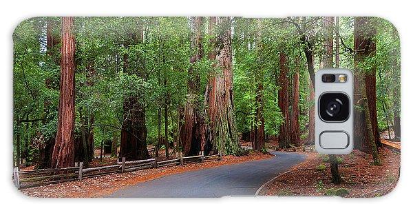 Beautiful Redwood Grove Galaxy Case