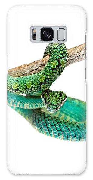 Beautiful Sri Lankan Palm Viper Galaxy Case