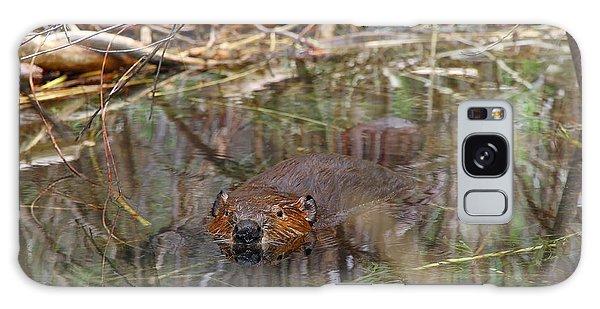Beaver Look Galaxy Case