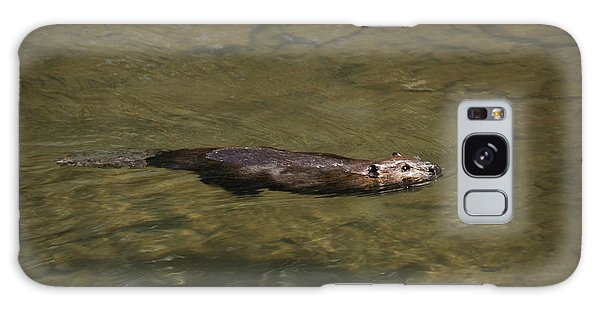 Beaver Swim Galaxy Case by Randy Bodkins