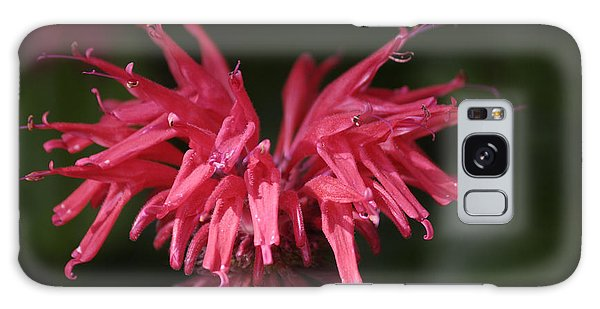 Bee Balm Galaxy Case by Randy Bodkins