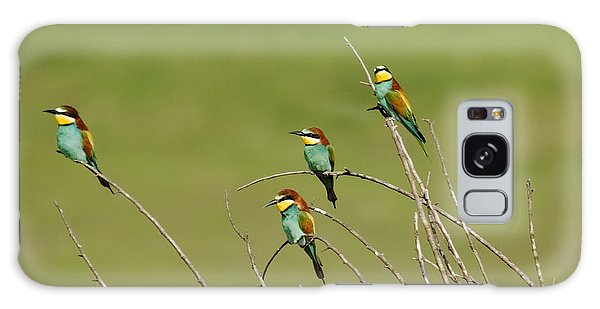 Bee Eaters  Galaxy Case