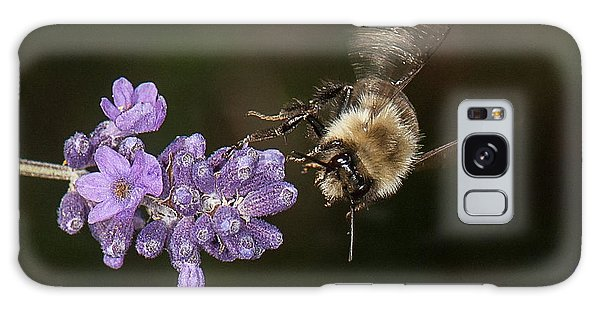 Bee Landing On Lavender Galaxy Case by Len Romanick