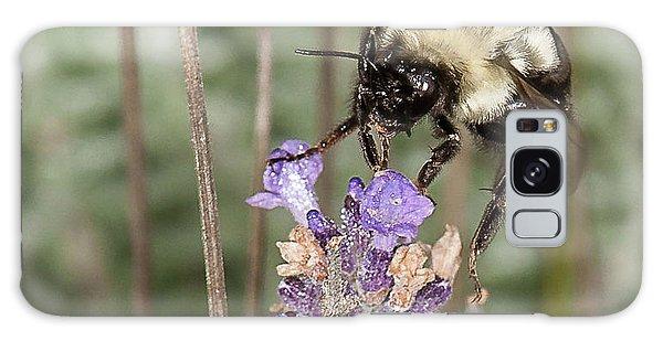 Bee Lands On Lavender Galaxy Case by Len Romanick