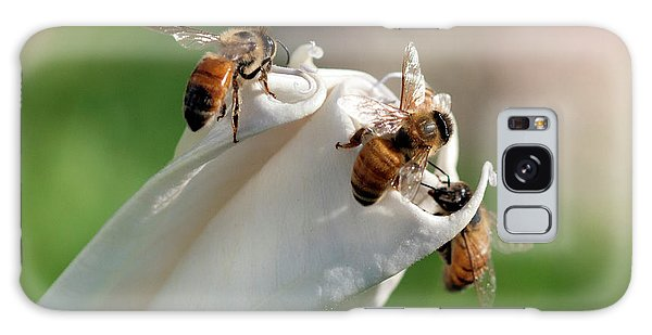 Bees On Angel Trumpet Galaxy Case