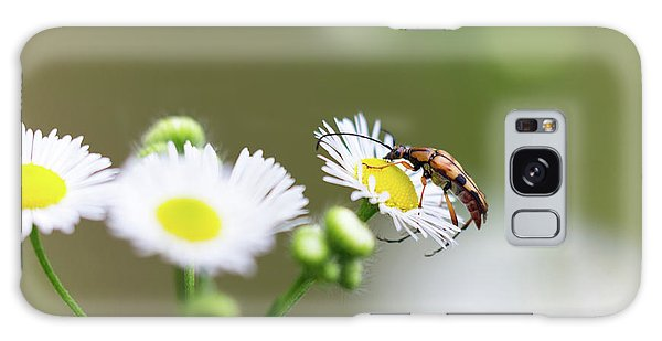 Beetle Daisy Galaxy Case