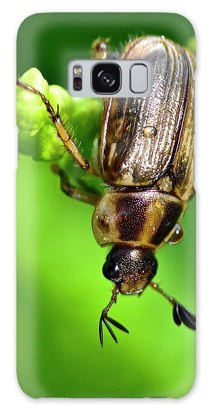 Beetle Galaxy Case