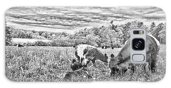 Belted Galloway Beef Cattle Galaxy Case by Daniel Hebard